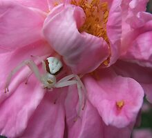 Pretty In The Pink by Tracy Faught