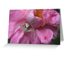 Pretty In The Pink Greeting Card