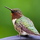 Hummer Up Real Close by TJ Baccari Photography
