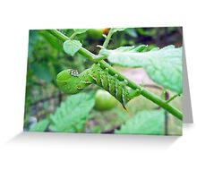 Tobacco Hornworm - Manduca sexta - Six Spotted Hawkmoth Greeting Card