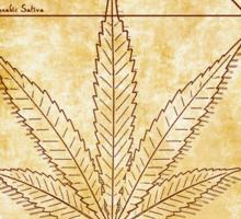 Vitruvian Cannabis Sticker