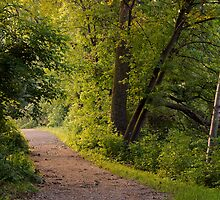 Light to my Path ~ Psalm 119:105 by Robin Clifton