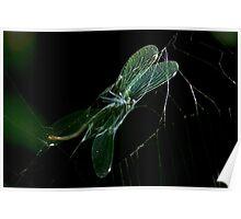 prey spider Poster