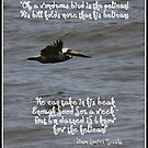 The Wondrous Pelican by Paula Tohline  Calhoun