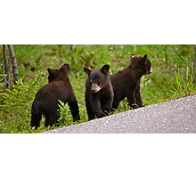 Bear Cubs Photographic Print