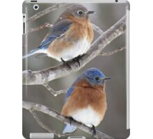 Mr. & Mrs. Eastern Bluebird iPad Case/Skin