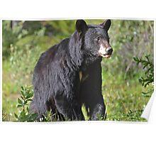 Mother Black Bear Poster