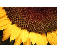 Colors of the Sunflower Photographic Print