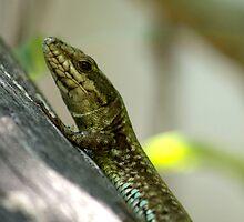 small lizard by slavikostadinov