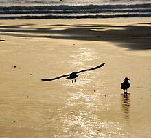 Two fit birds at Watergate by DMHotchin