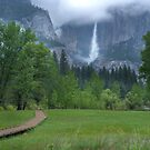 From a Green Meadow - Yosemite by Barbara Burkhardt