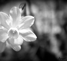 A Single Daffodil by KarenCee