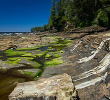 Shelf Life - West Coast Trail, Vancouver Island, Canada by Phil McComiskey