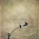 A Short Moment by Priska Wettstein