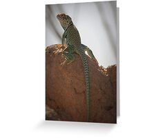 Eastern Collared Lizard (Male) Greeting Card