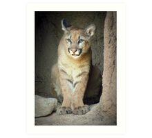 Mountain Lion Cub (Cruz) Art Print