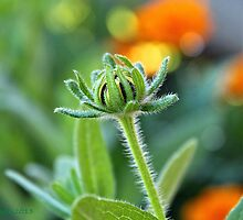 almost a flower... winnemucca by DonActon