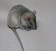 Rat by SteveCriz