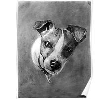 Dog Portrait Commission 1 Poster