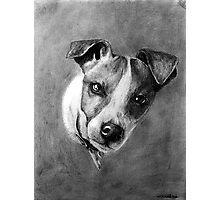 Dog Portrait Commission 1 Photographic Print