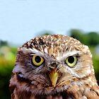 Burrowing owl by bundug