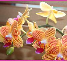 orchids by Jeannine de Wet
