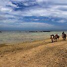 Horses in Paradise - Coral Coast, Fiji by clickedbynic