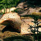 Mushroom by AndrewPS3Panda