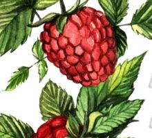 Raspberries Sticker