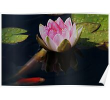Water Lily Friends ! Poster