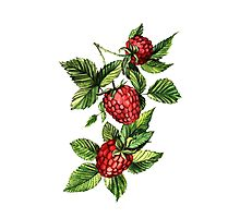 Raspberries Photographic Print