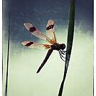 Snapdragon Gone to Seed by kibishipaul