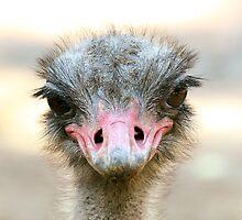 Whaddup? Ostrich by Richard Eijkenbroek