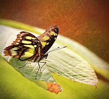 Butterfly - Ready for takeoff by Richard Eijkenbroek