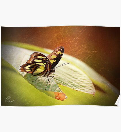 Butterfly - Ready for takeoff Poster