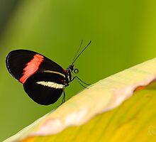 Butterfly - Climbing the hill by Richard Eijkenbroek