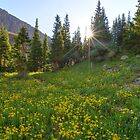 Golden Field of Blue Lakes Sunshine - Colorado Images by RobGreebonPhoto
