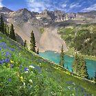 Colorado Wildflowers - Lower Blue Lake Beauty by RobGreebonPhoto
