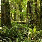 Green Abundance by Wolf Read