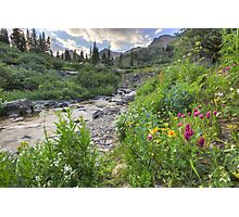 Colorado Wildflowers - Yankee Boy Basin Evening 2 Photographic Print