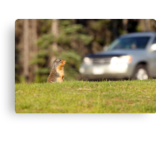 Of Cars and Critters Canvas Print