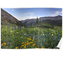 Colorado Wildflowers - Yankee Boy Basin Evening 3 Poster