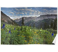 Colorado Wildflowers - Yankee Boy Basin Evening 1 Poster