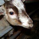 Goat by Kidono-chan