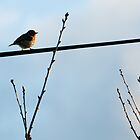 Robin, on a wire. by Mark Smith