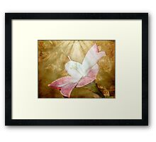Lily in Lenabem Lightwaves Framed Print