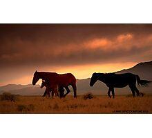 Wild Joy Photographic Print