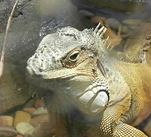 Iguana Beauty by Carol L