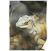 Iguana Beauty Poster