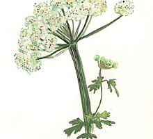 Hedge Parsley by Sam Burchell